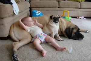baby+dog